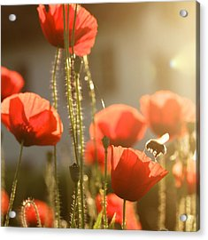 Garden Glow Acrylic Print by Colleen Williams