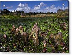 Garden In The Glades Acrylic Print by Debra and Dave Vanderlaan