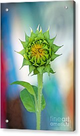 Acrylic Print featuring the photograph Garden Of Many Colors by Gwyn Newcombe