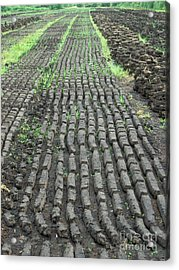 Acrylic Print featuring the photograph Garden Of Peat by Brenda Brown