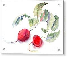 Garden Radish Acrylic Print