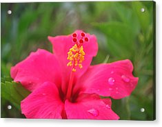 Acrylic Print featuring the photograph Garden Rains by Miguel Winterpacht