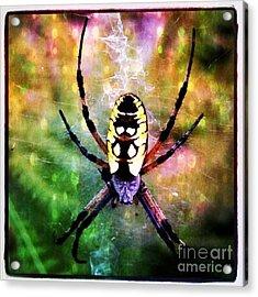 Garden Spider Acrylic Print by Christy Bruna