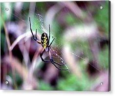 Garden Spider Acrylic Print by Deena Stoddard
