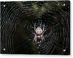 Acrylic Print featuring the photograph Garden Spider by Matt Malloy