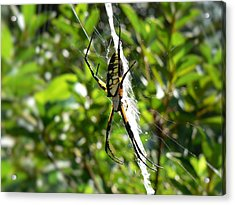 Acrylic Print featuring the photograph Garden Spider On Web by MM Anderson