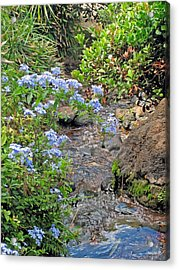 Garden Stream Acrylic Print