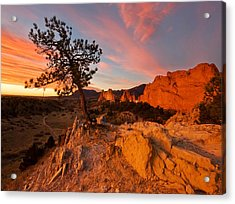 Acrylic Print featuring the photograph Garden Sunrise by Ronda Kimbrow