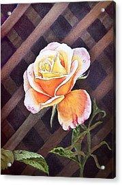 Garden Tea Rose Acrylic Print by Irina Sztukowski