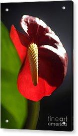 Garden Variety Acrylic Print by Dan Holm