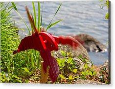 Garden Variety Lobster Acrylic Print