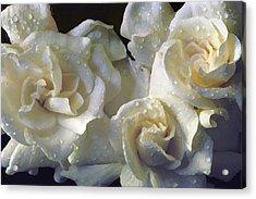 Gardenia I Acrylic Print