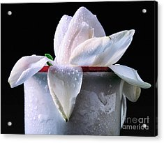 Acrylic Print featuring the photograph Gardenia In Coffee Cup by Silvia Ganora