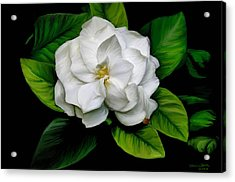 Acrylic Print featuring the painting Gardenia by Sharon Beth
