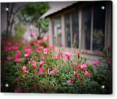 Gardens Of Pink Acrylic Print by Linda Unger