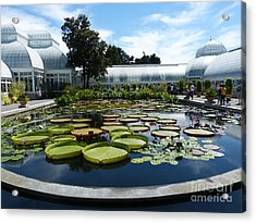 Pond Of Lilies Acrylic Print by Marguerita Tan