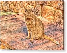 Garfield 01 Acrylic Print
