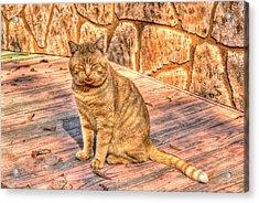 Garfield 02 Acrylic Print