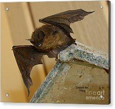 Gargoyle Bat Acrylic Print