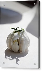 Garlic Clove Acrylic Print