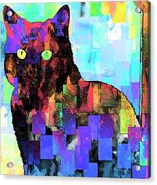 Gatdritos Acrylic Print