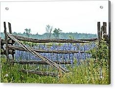 Gate To Blue Acrylic Print