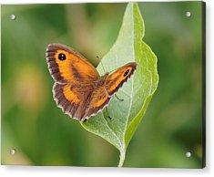 Gatekeeper Butterfly-02 Acrylic Print
