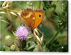 Gatekeeper Butterfly Acrylic Print by Tony Murtagh