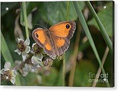 Gatekeeper Butteryfly Acrylic Print by Scott Lyons