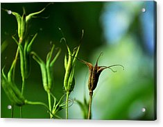 Acrylic Print featuring the photograph Gather If You Wish. Then Let Them Go. by Rebecca Sherman