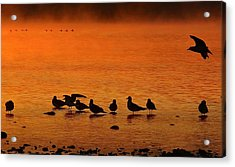 Gathering At Sunrise Acrylic Print by Nick Kloepping