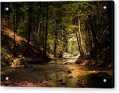 Acrylic Print featuring the photograph Gathering At The Stream by Haren Images- Kriss Haren