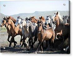 Gathering Horses Acrylic Print by Lee Raine