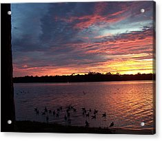 Gathering Acrylic Print by Michele Kaiser