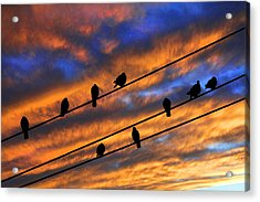 Acrylic Print featuring the photograph Gathering by Mike Flynn