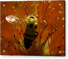 Gathering Nectar Acrylic Print by Camille Lopez