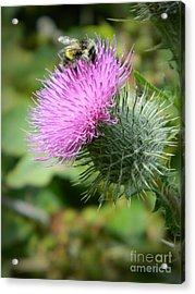Gathering Pollen Acrylic Print by Chalet Roome-Rigdon