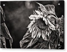 Gathering Sun Acrylic Print