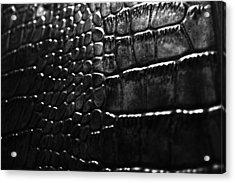 Gator Acrylic Print by Anthony Cummigs