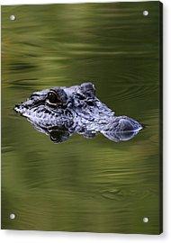 Gator Eyes 8x10 Acrylic Print by David Lynch