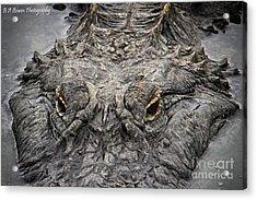 Gator Eyes Acrylic Print by Barbara Bowen