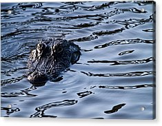 Gator On The Hunt Acrylic Print by Andres Leon