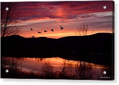 Geese After Sunset Acrylic Print