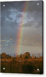Geese And Rainbow Acrylic Print