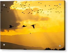 Geese At Sunset-2 Acrylic Print