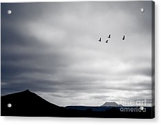 Acrylic Print featuring the photograph Geese Flying South For Winter by Peta Thames