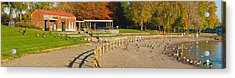 Geese Gathering In Blue Lake Regional Acrylic Print