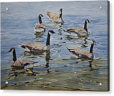 Geese Acrylic Print by Helal Uddin