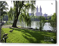 Geese In Central Park Nyc Acrylic Print