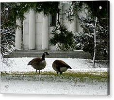 Geese In Snow Acrylic Print by Kathy Barney
